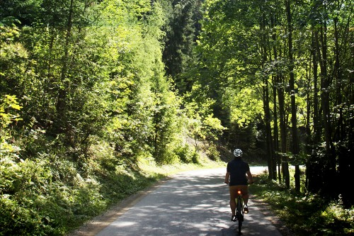 R11 Radweg im Wald